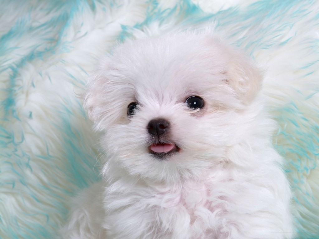 Cute white puppies in photos