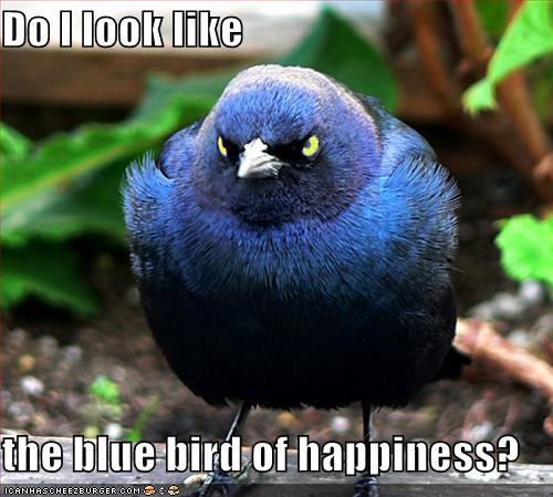 Title 'em Funny-pictures-this-is-not-the-blue-bird-of-happiness