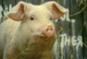 alternate ending to animal farm Summary chp 10 years have passed, and many of the animals are dead expressing his happiness that the mistrust between animal farm and the others is now at an end.