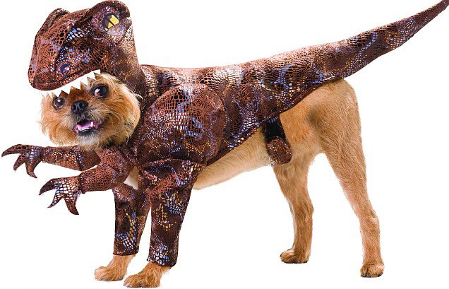 a hard choice between having a dog and a dinosaur Have your dogs sit or lie down to practice self-control, especially if one dog seems nervous or excited phifer says jittery energy can lead to frustration or aggression first impressions between dogs are really important, he says.