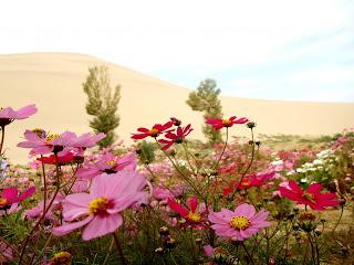 Desierto y flores  Paisajes de flores