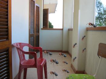 Bisbigli come liberarci delle formiche in casa e sui balconi - Formiche in cucina ...