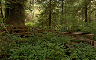 Hiking Trails In Carmanah Walbran On Vancouver Island