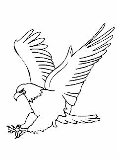 Desenhos de águia para colorir