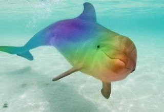 Healing with the Rainbow Rays: Dolphin Healing