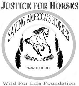 Justice For Horse