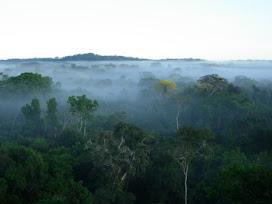 Los bosques tropicales son los ecosistemas vegetales terrestres más vulnerables al cambio climático