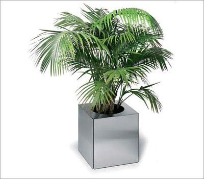Fotos de Decoração com Vasos de Plantas