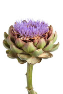 click on artichoke flower below for flipcards of all posts!