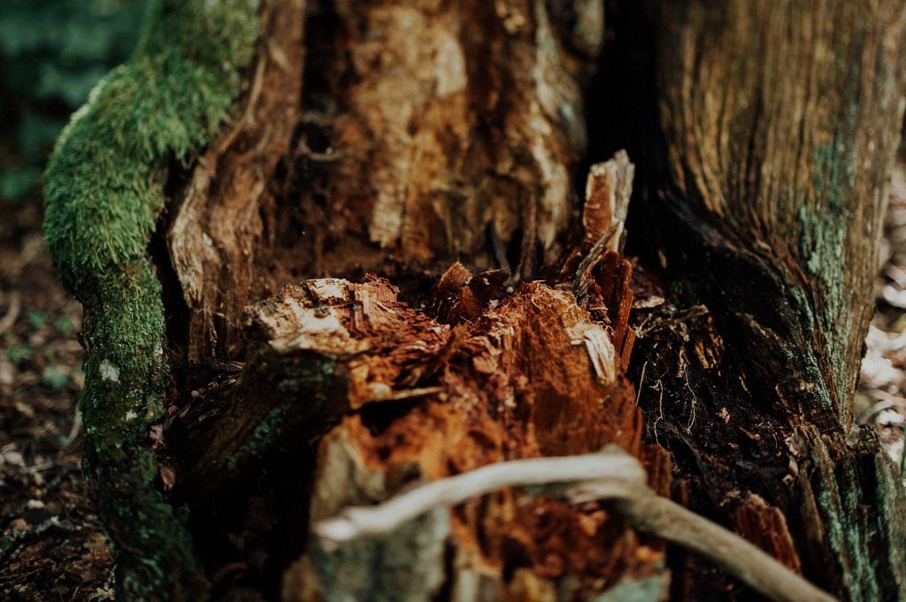 Mossa och trä