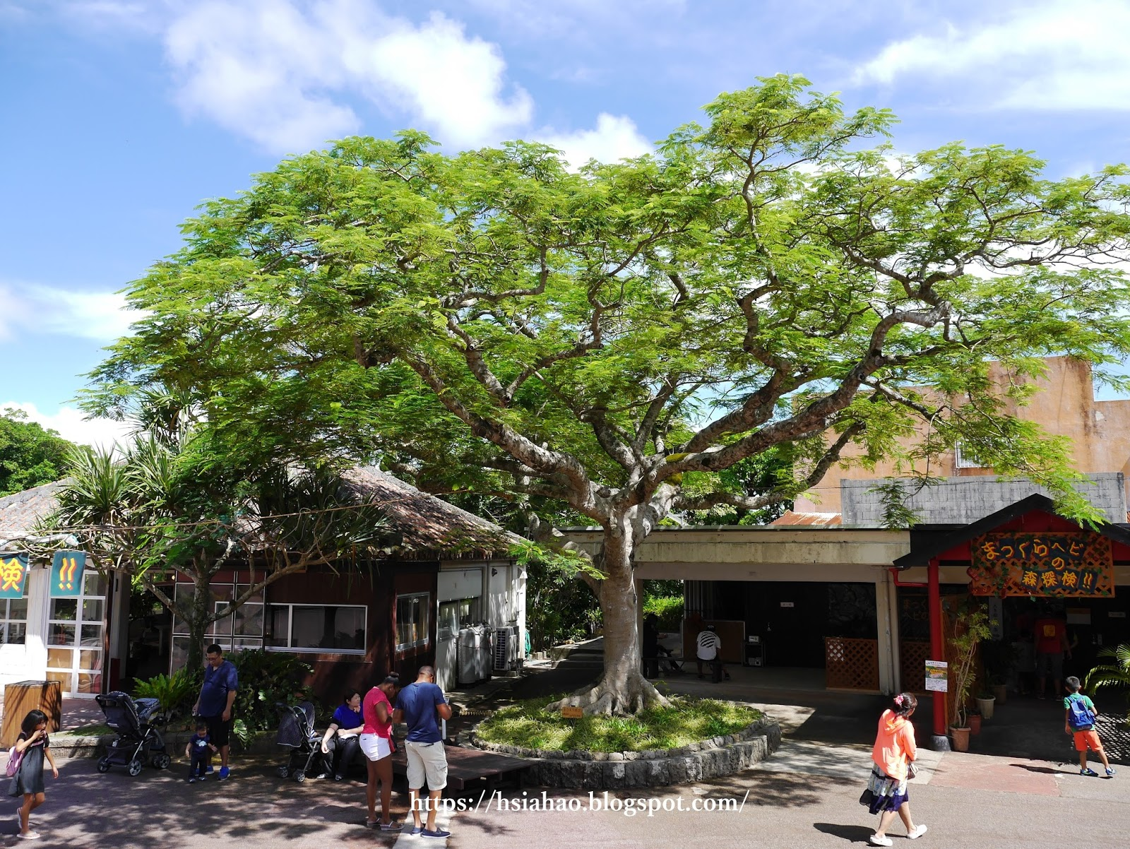 沖繩-景點-沖繩世界文化王國-自由行-旅遊-Okinawa-world-Gyokusendo-Cave