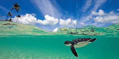 Diving in Wakatobi, Plongée dans Wakatobi, paradis sous-marin dans Wakatobi