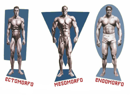 Ectomorfo, Mesomorfo ou Endomorfo - Descubra Seu Biotipo Corporal