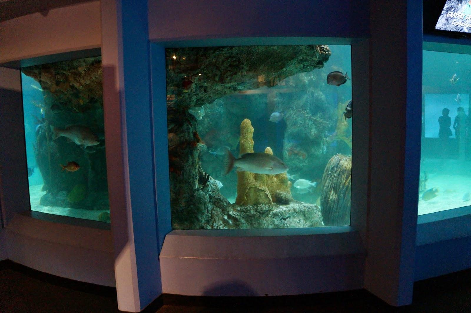 Evan And Lauren 39 S Cool Blog 8 7 14 Mystic Aquarium And