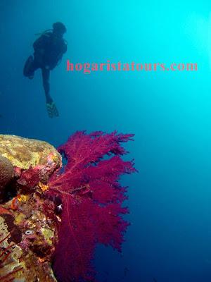 """<img src=""""spot diving in wakatobi.jpg"""" alt=""""the most beautiful of spot diving in wakatobi"""">"""