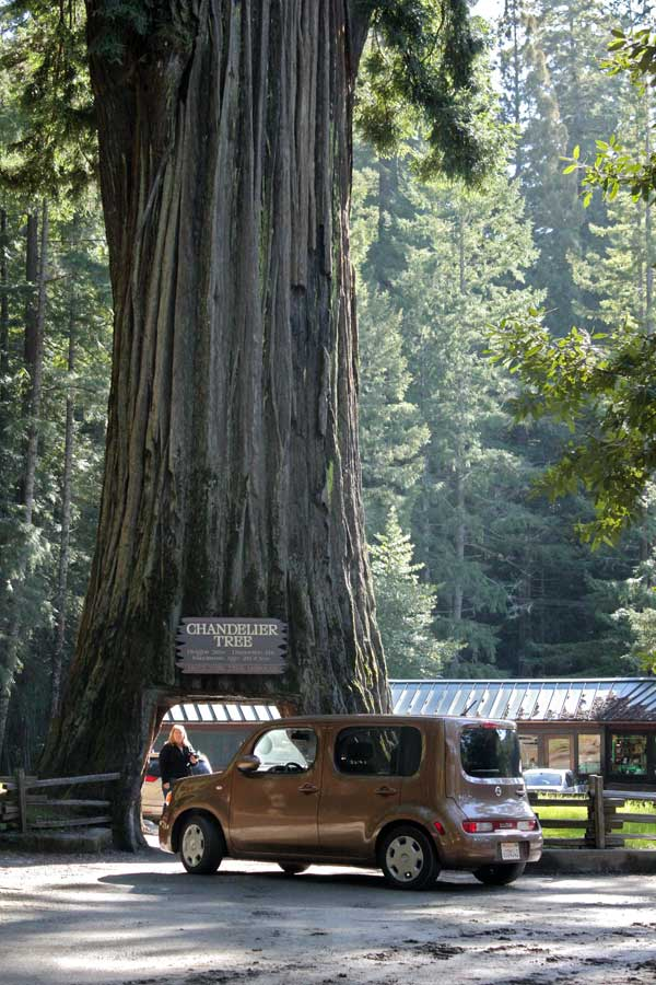 2012 Nissan Cube at the Drive-Thru Tree in Leggett, CA