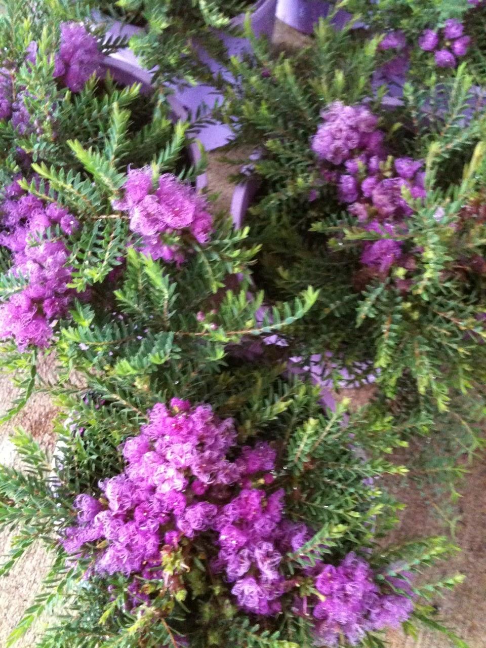 Gondwana Nursery Melaleuca Little Beauty In Full Flower