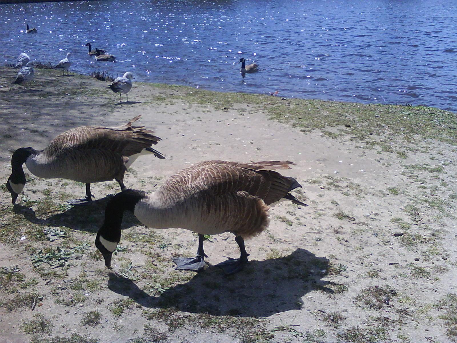 canada goose Mantra codziennego