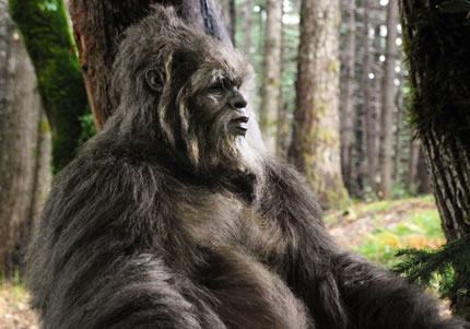 Washington Sasquatch Encounter