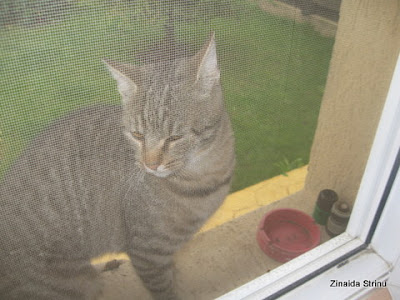 la-fereastra-cu-pisici-5