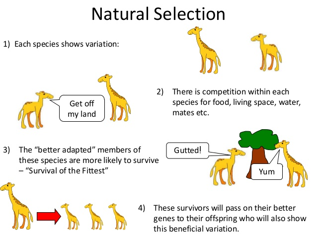 Why Is Genetic Variation Important For Natural Selection