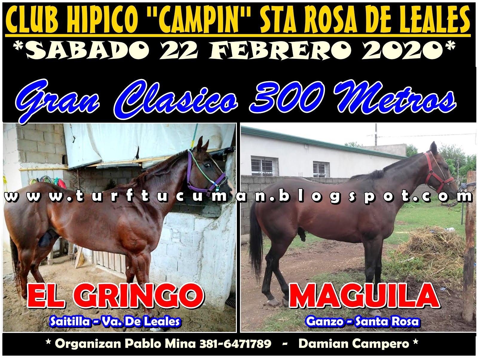 GRINGO VS MAGUILA