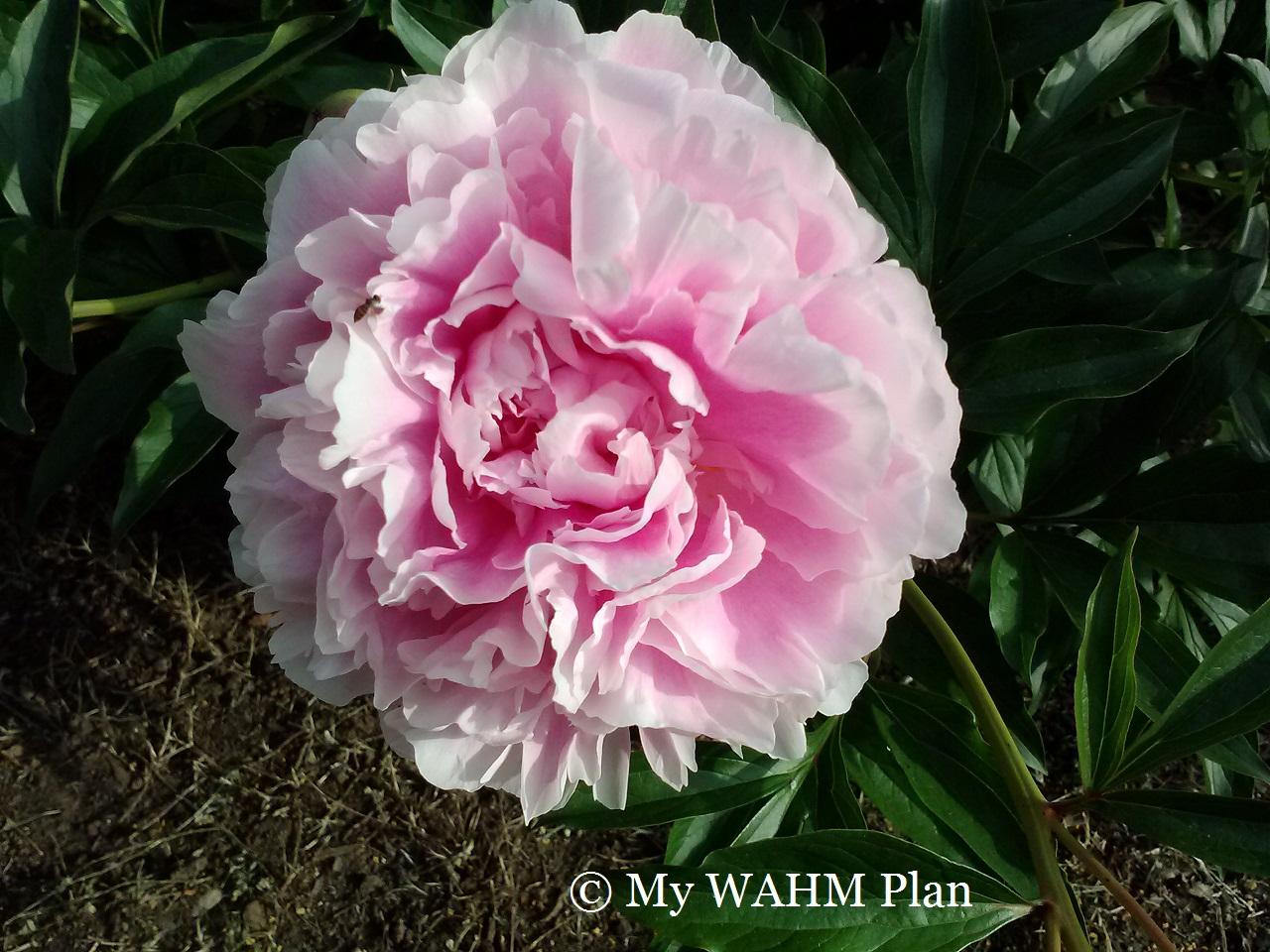 May #Garden