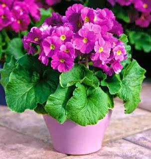 Beneficios y remedios saludables de primavera