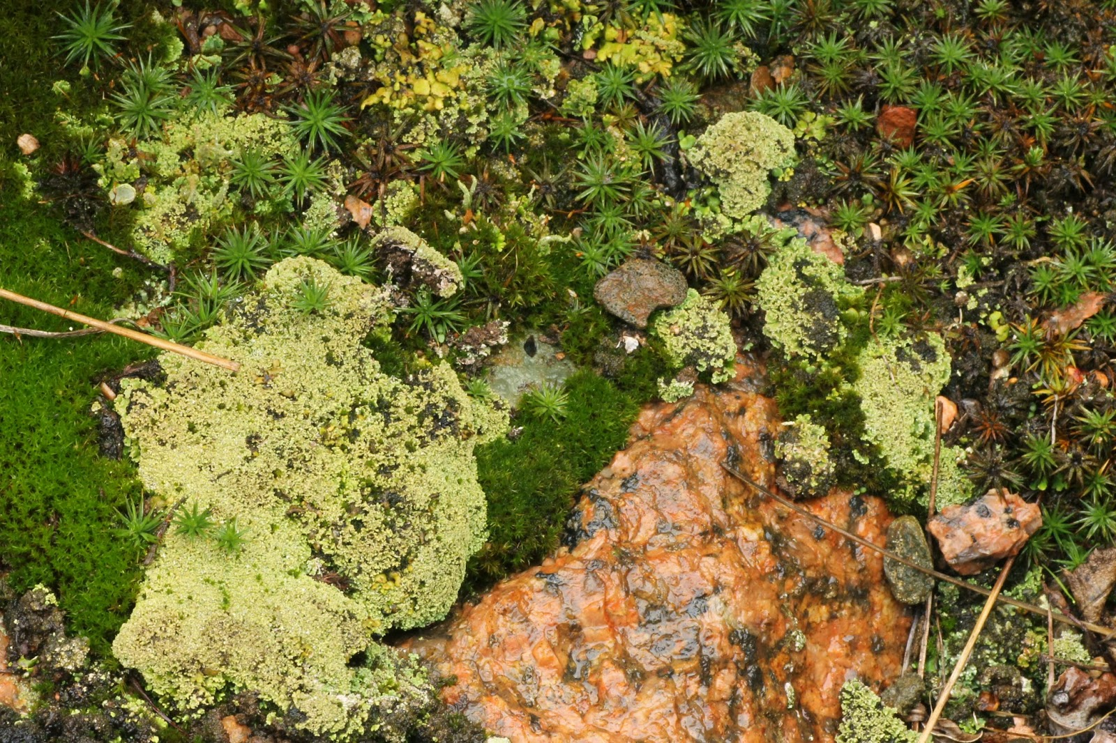 Distracted Naturalist: Moss and Lichen Watching at Quarry ...