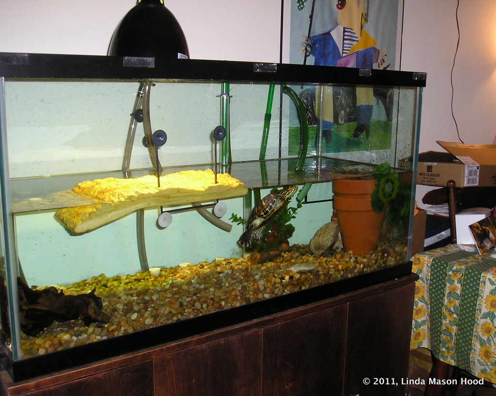 ... aquarium. (yes, thats right... I have two large aquariums in my