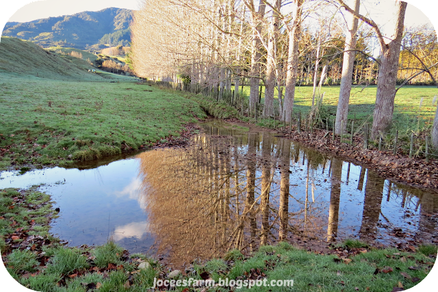 July Reflections  ||  joceesfarm.blogspot.co.nz