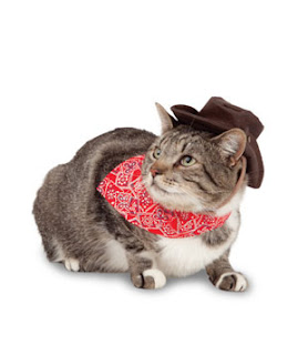 cowboy cat 300 Fab Five   Halloween Costumes DIY