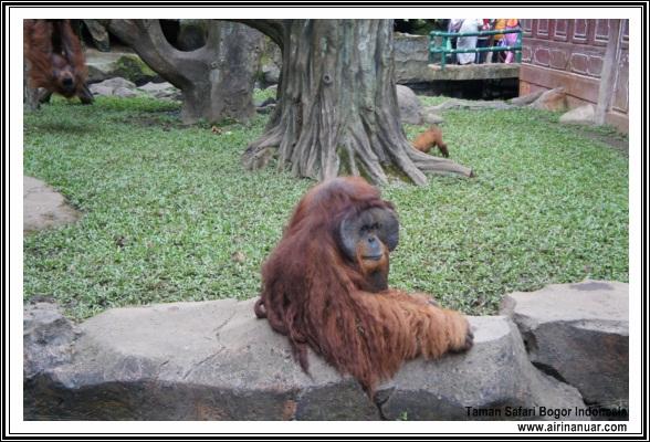 safari bogor indonesia
