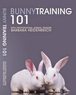 Bunny Training 101 Video