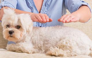 Benefícios do Reiki em Animais