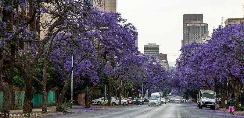 Central Pretoria during South African Spring