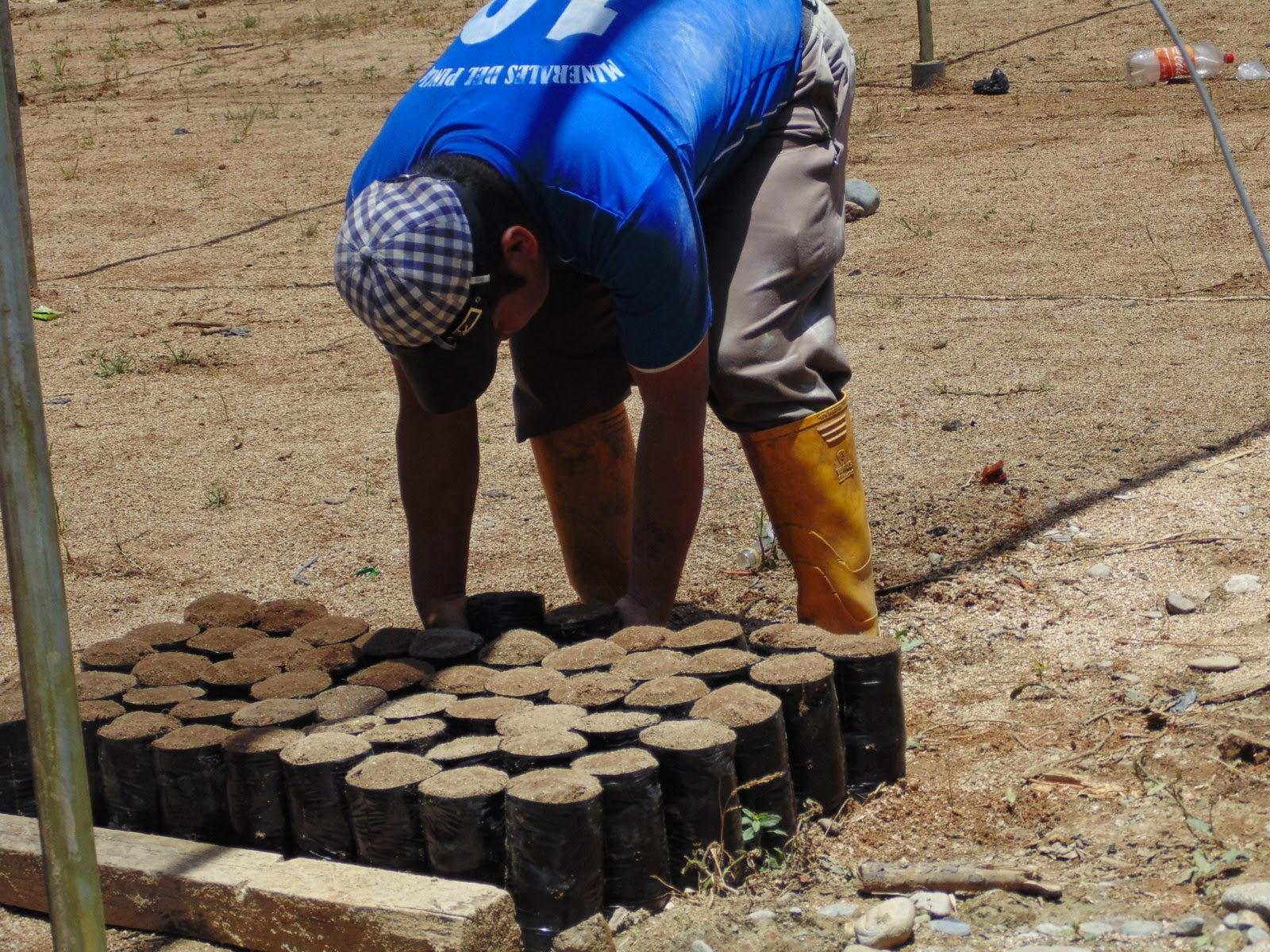 Zamora chinchipe vivero parroquial acoger 25 ooo plantas for Viveros en zamora