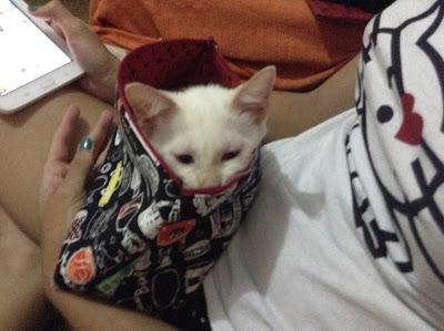 donna rita - minha vida com os gatos - cristina