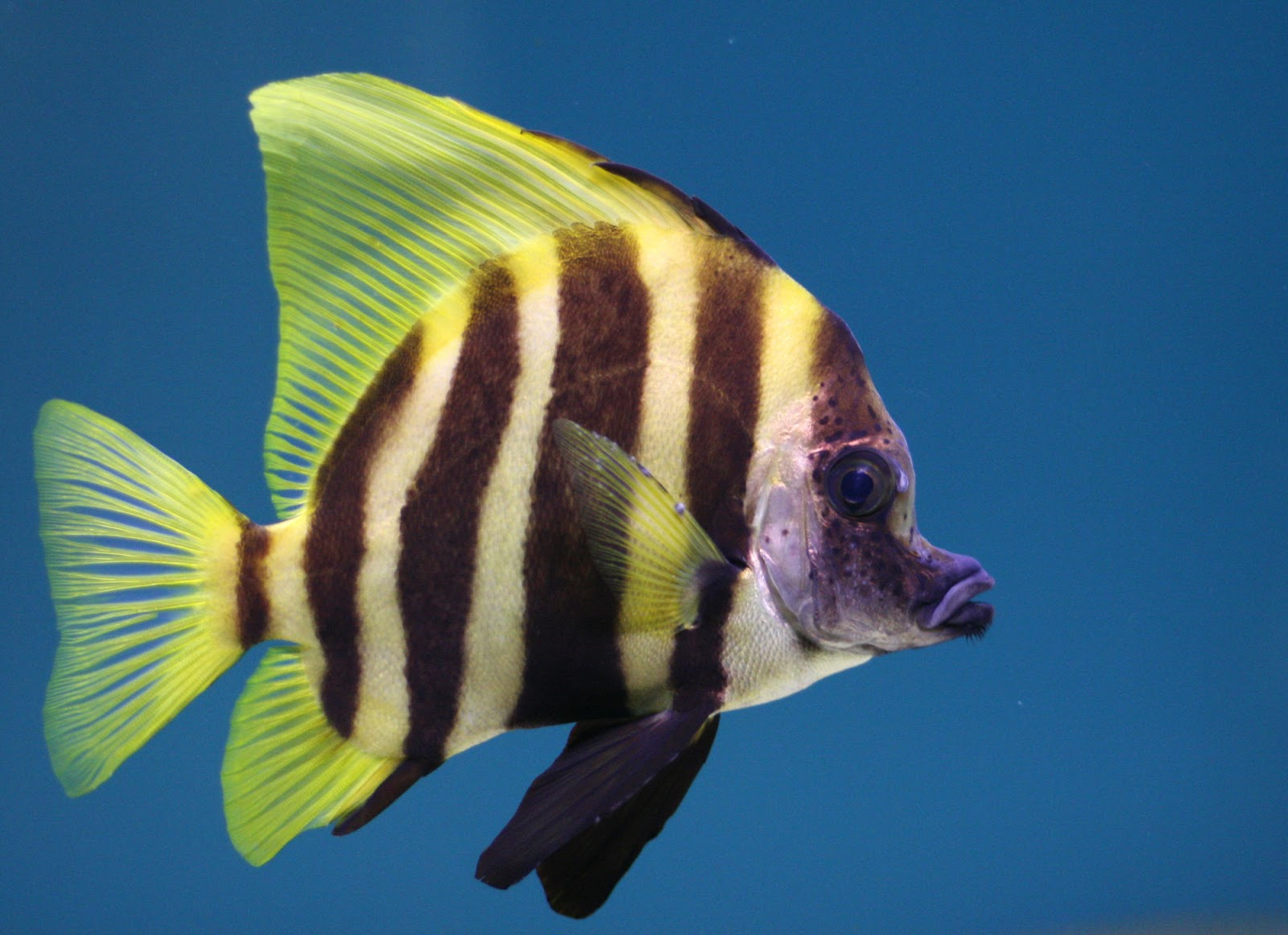 Tropical fish wild life animal for 405 tropical fish