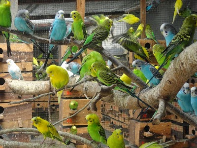 Harga Burung