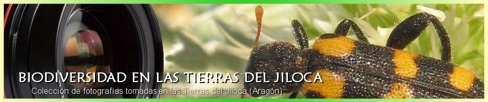 Biodiversidad en las tierras del Jiloca