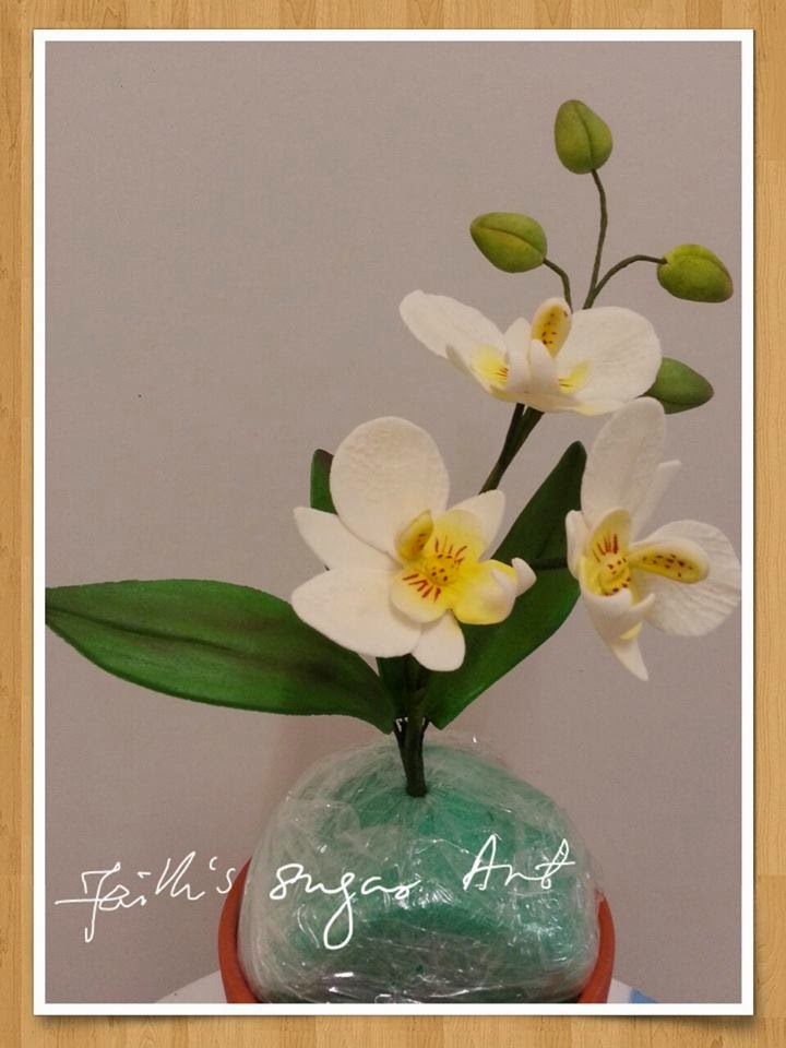 Moth Orchid Making Class