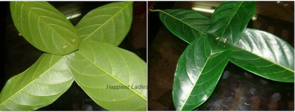 make jackfruit leaves idli stand