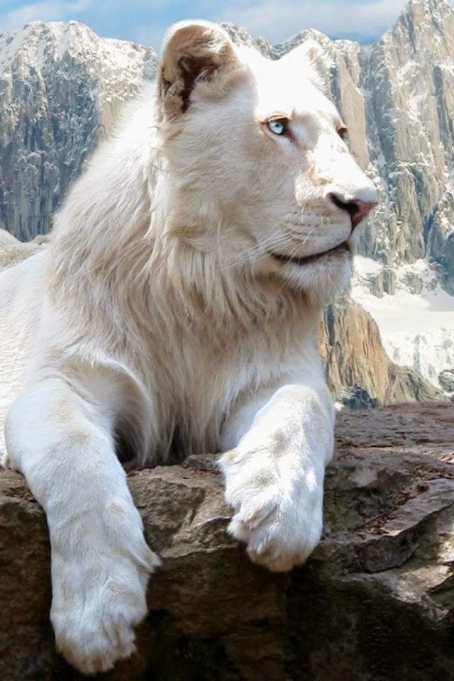 White Lion Mobile
