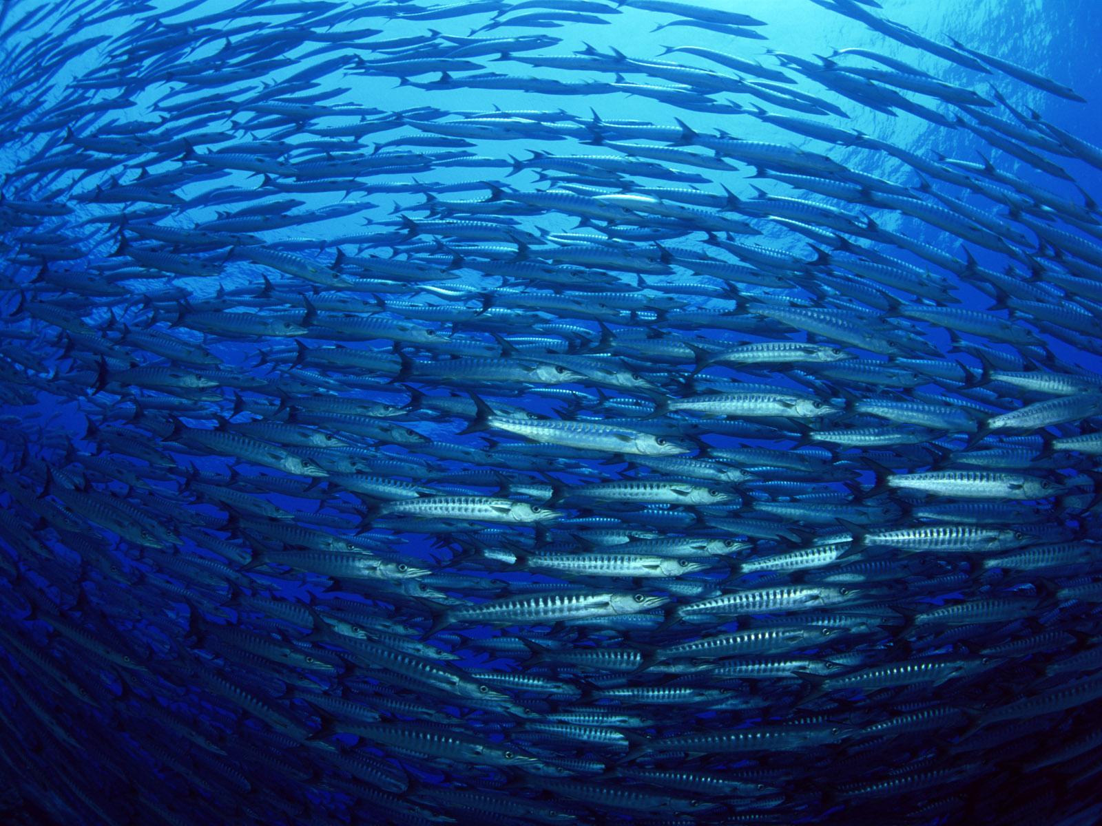 http://1.bp.blogspot.com/-SOeD9Qep64A/TkrX6OQiYwI/AAAAAAAALl4/CvDkDlk0Tr0/s1600/Underwater+Wallpapers+%252842%2529.jpg