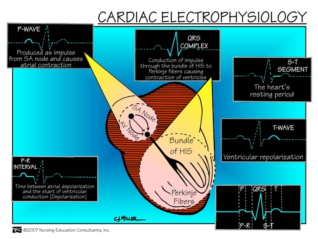 cardiovascular nursing Find and save ideas about cardiac nursing on pinterest | see more ideas about rn schools near me, paramedic student and common medications.