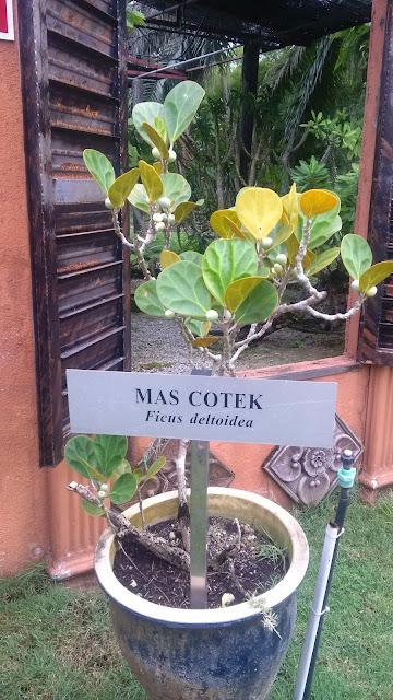 Herbs Garden, malaysia herbs, malaysia herbs garden, nursery, perak herbs, planting, speices of herbs, Taman Herba, tourism,