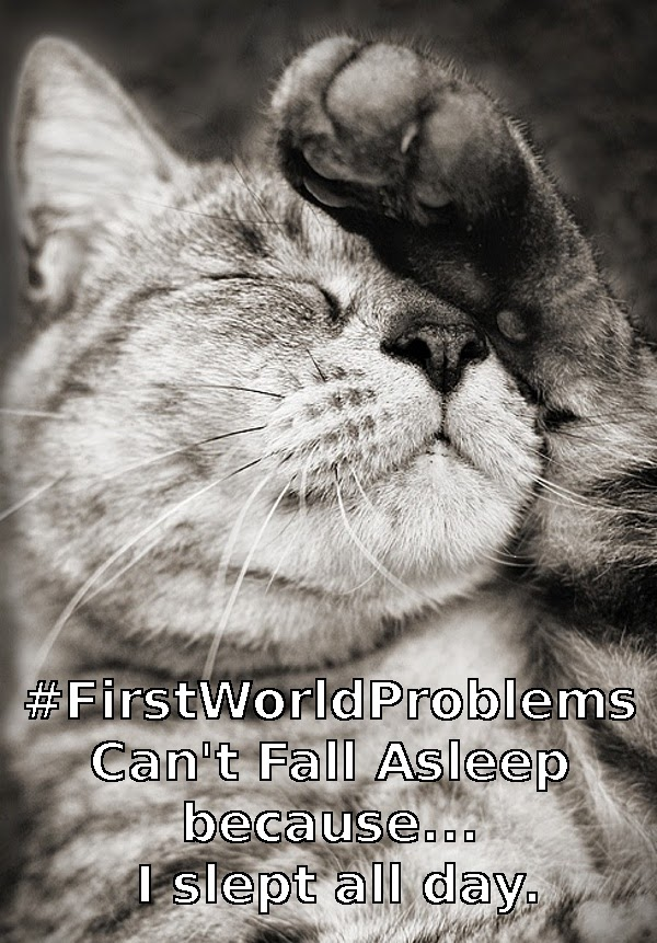 Cat Meme FIRST WORLD PROBLEMS
