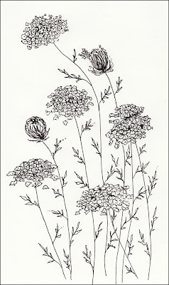 ink drawing of ditch weeds