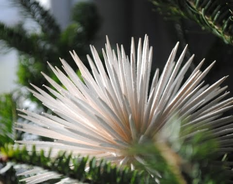 diy sea urchin ornaments